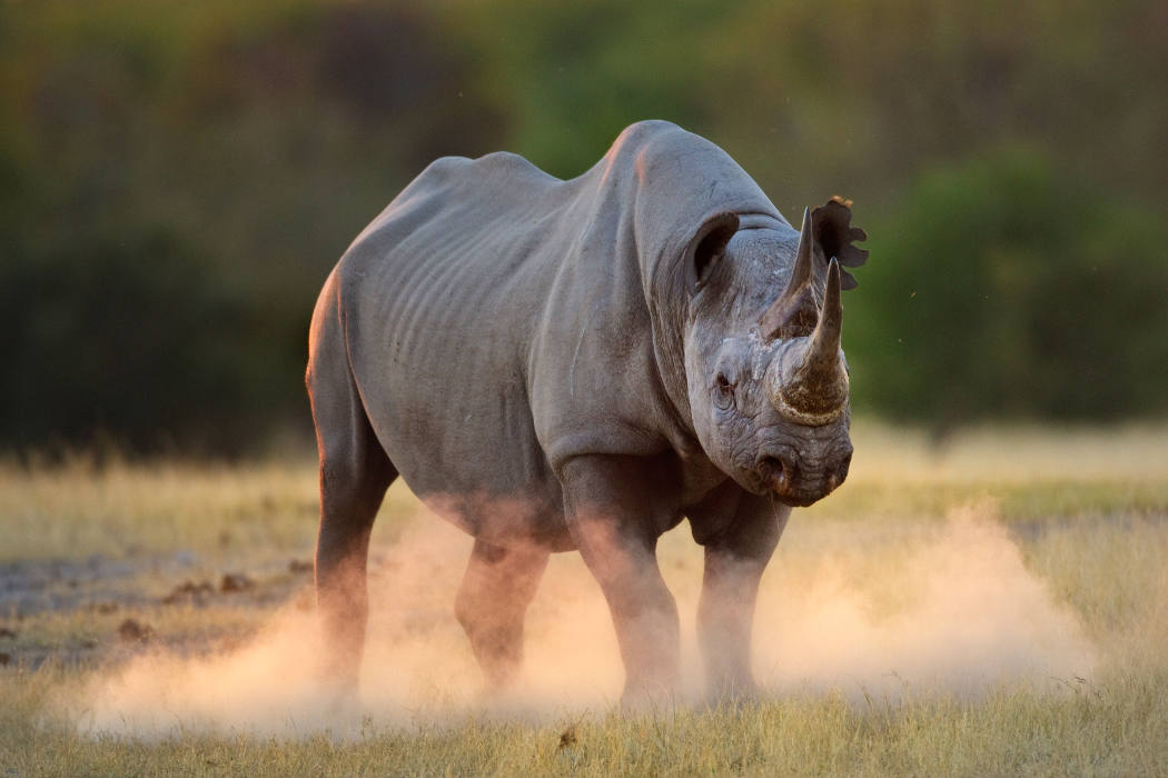 WWF_Noshorning-Namibia-Foto-Tony Heald-WWF-Canon_featured